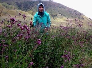 Lavender di Bukit Teletubis - Bromo