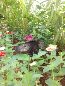 kupu-kupu hinggap di bunga